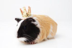 王冠をかぶっている