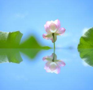 花 シャキーン